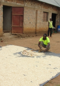 Here ABCD hopes to start a Food for Life - Africa Pilot Project utilizing the 10 room warehouse on site.