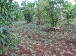 The Africa Bureau of Children's Development (ABCD) has had 4 acres of agriculture land donated to establish Hope Farm Moringa Project.