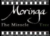 CLICK to view a You Tube on Moringa The Miracle Tree