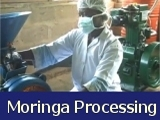 Processing Moringa in Africa