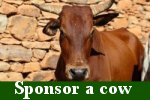 CLICK to sponsor a cow