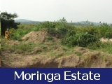Moringa Estate